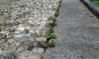 Diserbo_ecologico_3.jpg